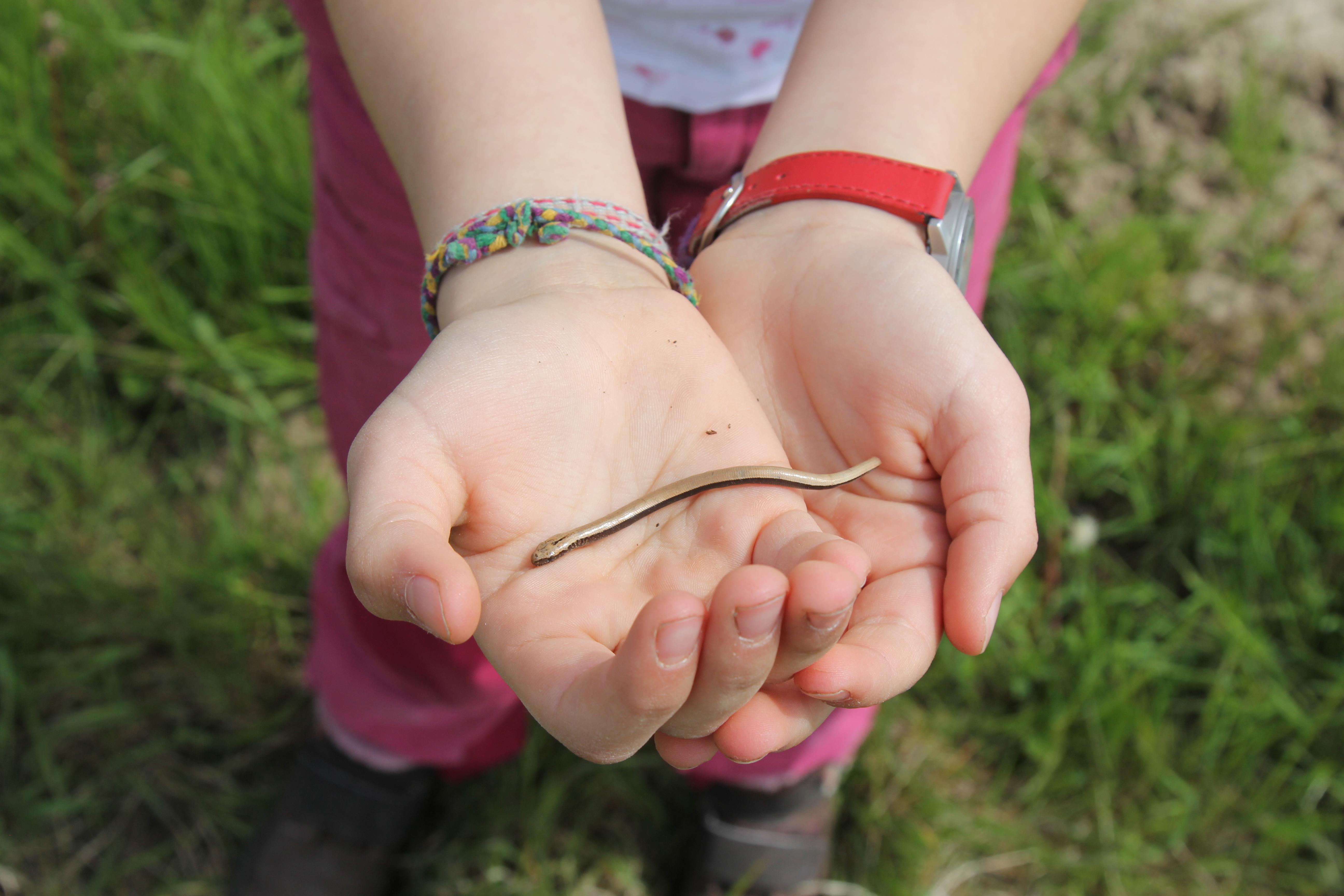 Atemberaubend Farm Hand Aufgaben Fortsetzen Fotos - Beispiel ...